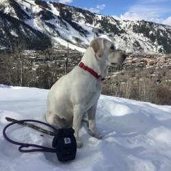 Aufkleber Bergamasker Hirtenhund 13