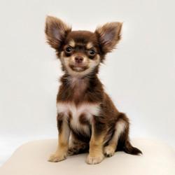 Welpen und kleine Hunde